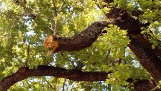 Un ramo danneggiato