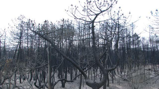 Pineta Ramazzotti Dopo L Incendio