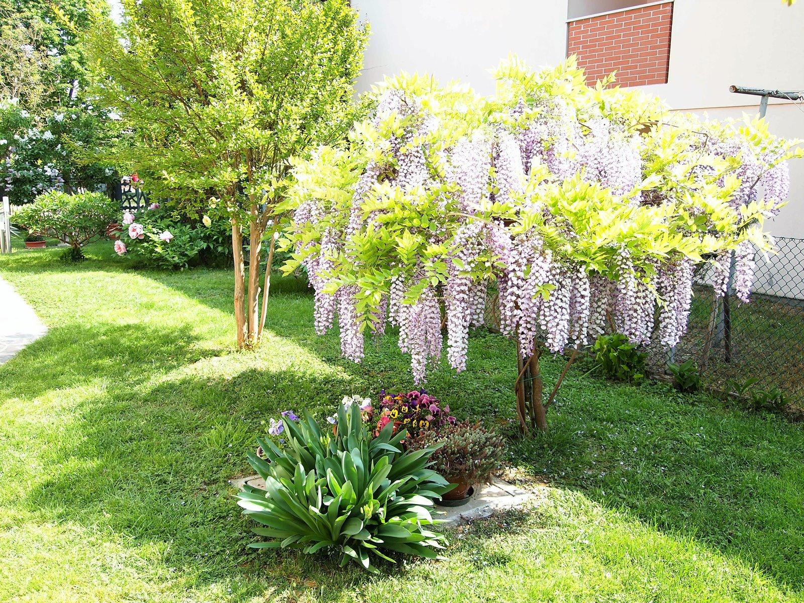 Gli angoli fioriti pi belli di fusignano premiati per la - Angoli di giardino ...