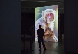 Museum Of Nonhumanity Installation View (detail) Photo Terike Haapoja