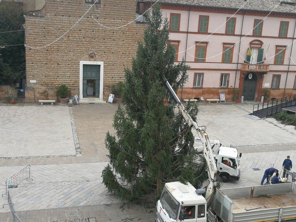 In piazza a Cervia è già arrivato l'albero di Natale, un abete donato da Pinzolo - Ravenna e Dintorni