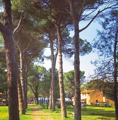 Pineta Parco I Maggio